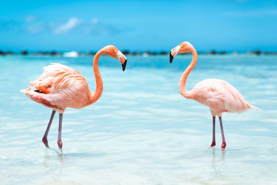 Aruba no Caribe